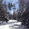 Climbing through snowshoe tracks.- Pipe Creek