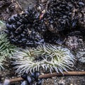 Anemone, barnacles and mussels at Kalaloch Beach and Rocks.- Kalaloch Beach + Rocks