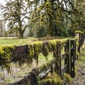 A moss-adorned fence near Merriman Falls in the Quinault River Valley.- Merriman Falls
