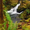 Falls Creek Falls on the Quinault National Recreation Trail System.- Quinault National Recreation Trail System, Cedar Loop