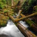 Cascade Creek on the Quinault National Recreation Trail System.- Quinault National Recreation Trail System, Cedar Loop