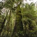 Cedar Bog on the Quinault National Recreation Trail System.- Quinault National Recreation Trail System, Cedar Loop
