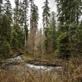 Falls Creek on the Quinault National Recreation Trail System.- Quinault National Recreation Trail System, Cedar Loop