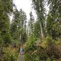 The Quinault National Recreation Trail System.- Quinault National Recreation Trail System, Cedar Loop