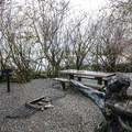 One of five walk-in campsites in Gatton Creek Campground.- Lake Quinault, Gatton Creek Campground