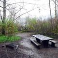 Walk-in campsite in Falls Creek Campground.- Lake Quinault, Falls Creek Campground