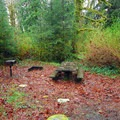 Typical campsite in Falls Creek Campground.- Lake Quinault, Falls Creek Campground