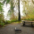 A typical campsite in Willaby Campground.- Lake Quinault, Willaby Campground
