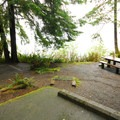 Typical campsite in Willaby Campground.- Lake Quinault, Willaby Campground