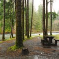 Campsite along Quinault River in Graves Creek Campground.- Graves Creek Campground