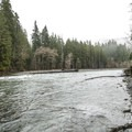 Quinault River at Graves Creek Campground.- Graves Creek Campground