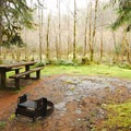 Typical campsite in Graves Creek Campground.- Graves Creek Campground