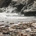 Western gulls (Larus occidentalis) at Kalaloch Beach 4.- Kalaloch Beach 4
