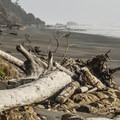 View south on Kalaloch Beach 4.- Kalaloch Beach 4