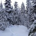 The start of the Swauk Forest Discovery Trail after heavy snowfall.- Swauk Forest Discovery Trail