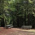 Picnic areas in Huddart Park.- Huddart Park