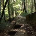 Trail cut into a fallen redwood at Big Basin Redwoods State Park.- Big Basin Redwoods State Park