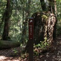 Dool Trail in Big Basin Redwoods State Park.- Big Basin Redwoods State Park