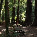 Quiet and peaceful picnic areas are awaiting underneath the redwoods.- Big Basin Redwoods State Park