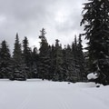 Gliding around the Corral Loop.- White Pass Nordic Center