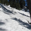 Passing a large Pacific silver fir (Abies amabilis) while ascending cross-country. - Amabilis Mountain