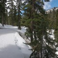 Easy skin-track along the South Fork of the Snoqualmie River.- Snow Lake