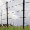 Briones Regional Park.- Briones Regional Park