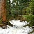 Snowy and green trail to Barclay Lake in the winter.- Barclay Lake Snowshoe