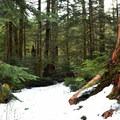 Barclay Lake Trail.- Barclay Lake Snowshoe