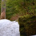 Wet conditions on the Barclay Lake Trail.- Barclay Lake Snowshoe
