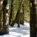Backcountry travel on the East Fork of the Foss River Trail.- East Fork of the Foss River