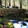 Crossing the Burn Creek Bridge on the East Fork of the Foss River Trail.- East Fork of the Foss River