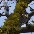 Lichen thriving in the high desert.- Chimney Rock Trail