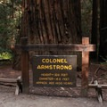 Colonel Armstrong Tree, named for the lumberman who saved the grove.- Armstrong Redwoods State Natural Reserve