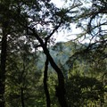 View from East Ridge Trail in Armstrong Redwoods State Natural Reserve.- Armstrong Redwoods State Natural Reserve