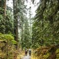 Enchanted Valley Trail.- Enchanted Valley Trail to Pony Bridge