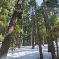 The forest on Mount Catherine ranges from dense to denser. - Mount Catherine