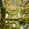 Taft Creek along the Hall of Moss Trail.- Hoh Rain Forest's Hall of Moss Trail