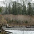 View south across Hoh River from the Sitka Nature Trail.- Hoh Rain Forest's Sitka Nature Trail