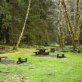 Day use picnic area in Hoh Campground.- Hoh Campground