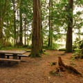 Typical campsite in Mora Campground.- Mora Campground
