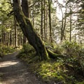 The 0.7-mile long access trail for La Push, Second Beach.- La Push, Second Beach