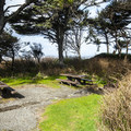 Day use picnic area in Kalaloch Campground.- Kalaloch Campground