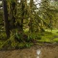 Sams River Loop Trail.- Sams River Loop Trail