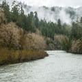 Queets River from the Sams River Loop Trail.- Sams River Loop Trail