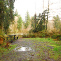 Typical campsite in Queets Campground.- Queets Campground
