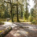 Queets Campground.- Queets Campground
