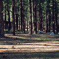 The campground's central sites are open and can get crowded on busy weekends.- Davis Creek Campground