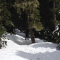 Snowshoeing the easily followed initial leg.- White Pass to Sand Lake