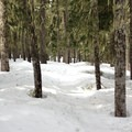 White Pass's signature dense, lichen-filled forest.- White Pass to Sand Lake